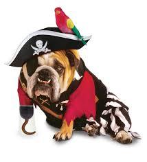 pirate_dog
